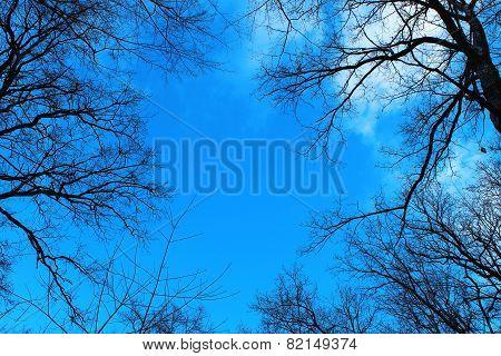 Black trees against the blue sky