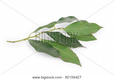 Green bay leaves.