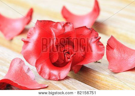 Camellia flower and petals