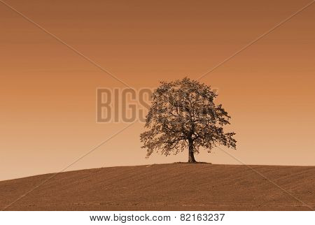 Lonely Autumnal Oak Tree On The Hill