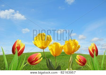 Springlike Background With Tulips