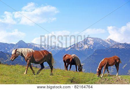 Grazing Horses In Alpine Landscape