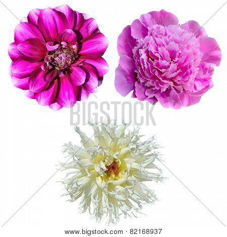 Set Of Three Flowers Isolated On White Background