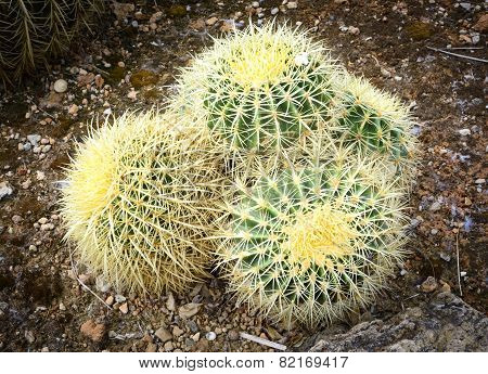 Small Pillow Like Cacti
