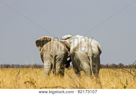 Elephant friends