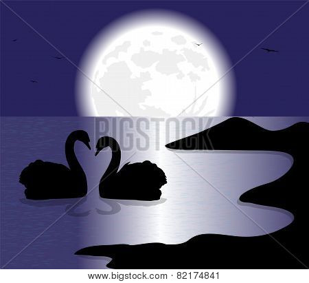 swans silhouette on the lake