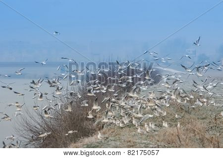 Group Of Gulls Flying On Shore