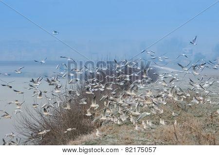 Group Of Gulls Flying On Shore