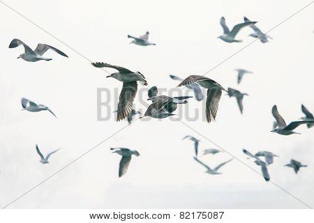 Group Of Gulls Flying