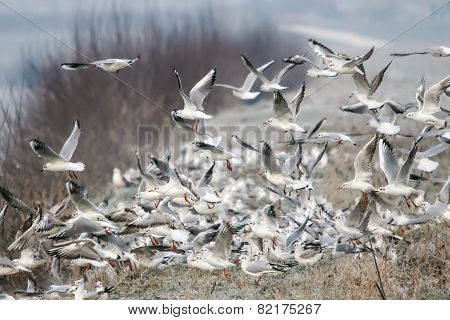 Group Of Gulls