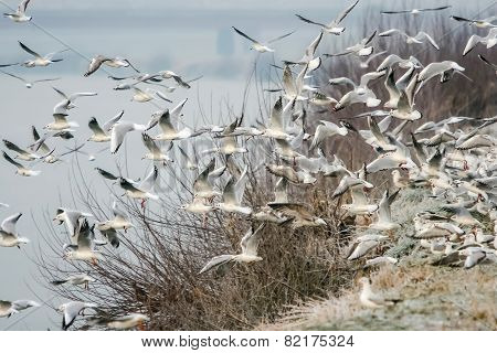 Group Of Seagulls Flying