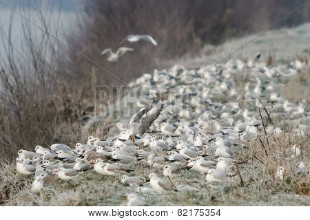 Group Of Seagulls On Shore