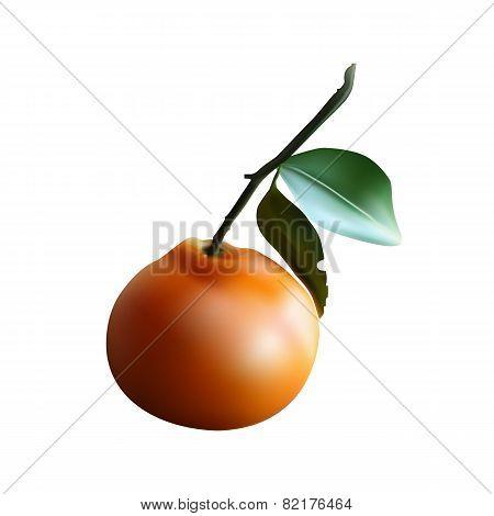 sweet fruit Mandarin for vitamin-rich diet.