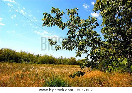 maple tree growing in forest plantations
