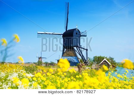 Kinderdijk, Netherlands at spring with flowers