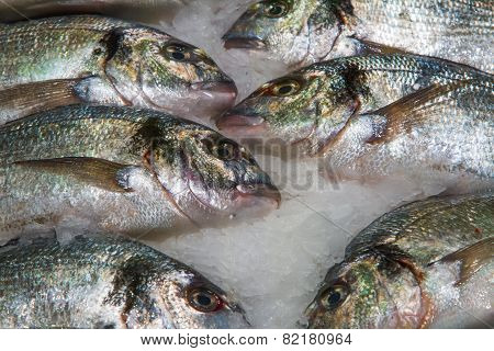 Gilthead (sparus Aurata) On Ice In Fish Market