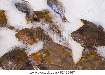 Fresh Fish On Ice In Fish Market