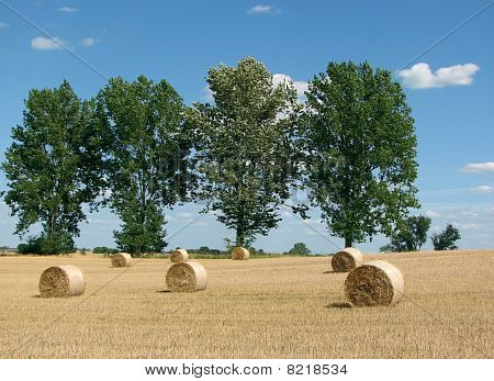 Golden Sheaves Of Hay