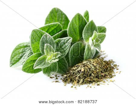 Fresh and dried oregano spices