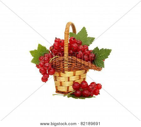 Redcurrant in small basket