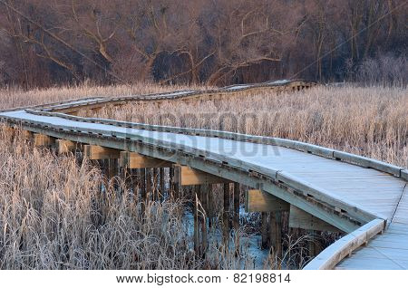 Boardwalk Traverse Into The Woods