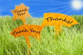 picture of thankful  - Three Labels With English Text Thank You And Thanks On Sunny Green Grass For Spring Or Summer Feeling And Blue Sky And Shining Sun - JPG