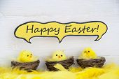 stock photo of chicken  - Three Sitting Easter Chicks In Easter Baskets Or Nest With Yellow Feathers On White Wooden Background With Comic Speech Balloon With English Text Happy Easter Used As Easter Decoration Or Easter Greetings - JPG