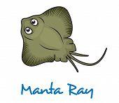 foto of manta ray  - Cartoon manta ray viewed from above with large eyes and text Manta Ray below - JPG