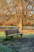 picture of bonnes  - Stock image of a park bench under an eerie looking tree in the Rheinhaue a national park in Bonn germany - JPG