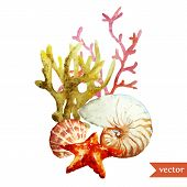picture of shell-fishes  - Beautiful watercolor vector with sea coral shell and star - JPG