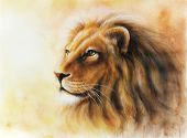 stock photo of airbrush  - lion head with a majesticaly peaceful expression Airbrush paintig on paper - JPG