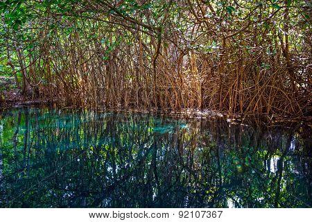Jungle Cenotte