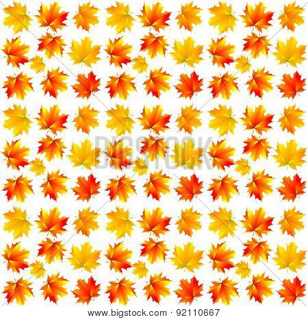 Pattern Of Yellow Maple Leaves