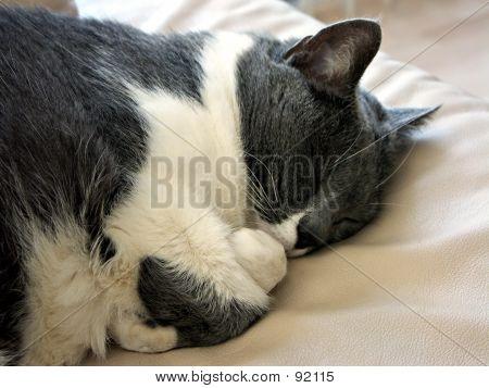 Thumb Sucking Cat