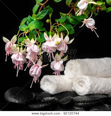 Spa Concept Of Branch Pink Fuchsia Flower, Towels And Zen Basalt Stones With Drops In Water, `frank