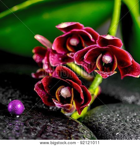 Spa Concept Of Dark Cherry Flower Orchid Phalaenopsis, Zen Basalt Stones With Drops And Lilac Beads,