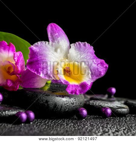 Spa Still Life Of Purple Orchid Dendrobium, Green Leaf Calla Lily With Dew And Pearl Beads On Black