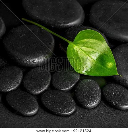 Spa Concept Of Green Leaf Calla Lily On Black Zen Stones With Dew, Closeup