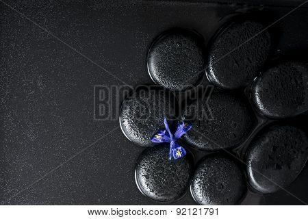 Beautiful Spa Concept Top Down Of Iris Flower And Black Zen Stones On Water, Closeup
