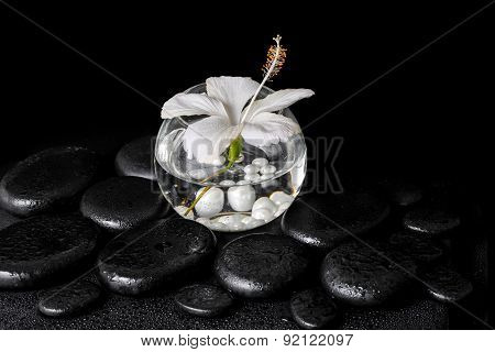 Spa Concept Of White Hibiscus Flower In Round Vase With Pearl Beads On Zen Basalt Stone With Drops,