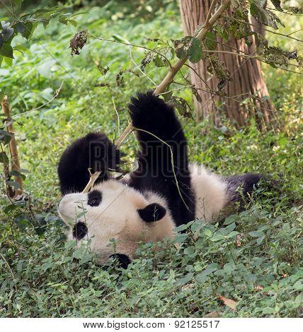 Visiting the park pandas