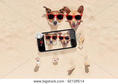 Couple Of Dogs Buried In Sand Selfie