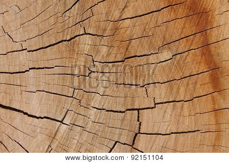 wooden texture from the tree, plum-tree, growth rings