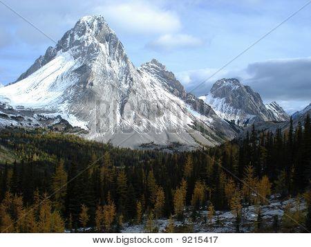 Mount Birdwood In The Canadian Rockies