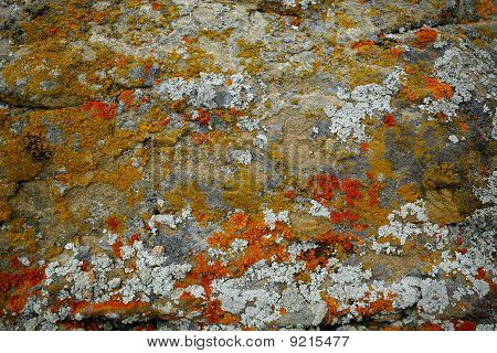 Lichens On The A Rock