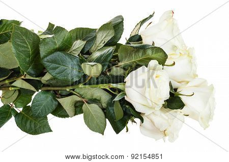 Side View Of Armful Of White Roses Isolated