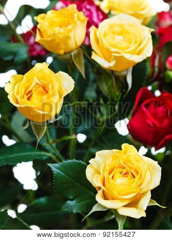 Yellow And Red Roses In Bunch Of Flowers