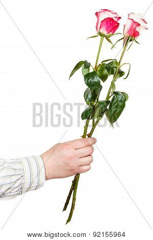 Male Hand Giving Two Pink Roses Isolated