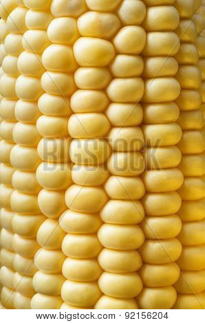 Sweetcorn Cob Close Up