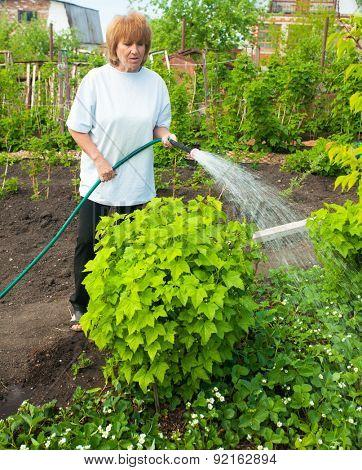 Mature woman watering garden beds